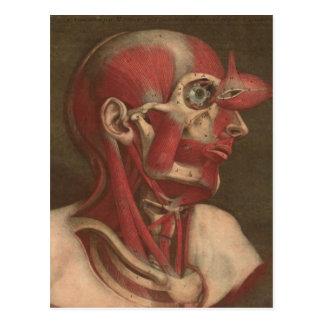 Vintager Kopf, Hals und Schultern der Anatomie-| Postkarte