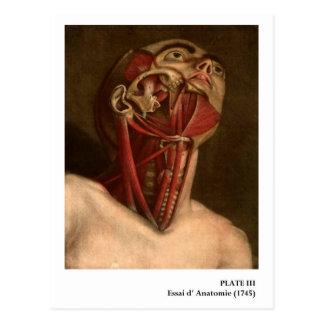 Vintager Kopf und Hals der Anatomie-| Postkarte