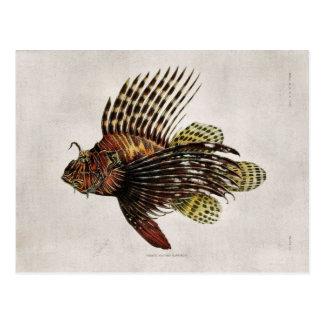 Vintager Lionfish Postkarte