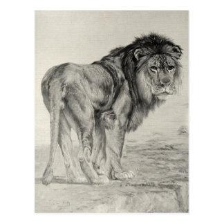 Vintager majestätischer Löwe Postkarte