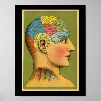 Vintager menschlicher Phrenologie-Druck Poster