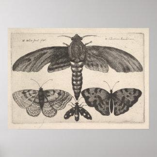 Vintager Motten-Schmetterlingelepidoptera-Druck Poster
