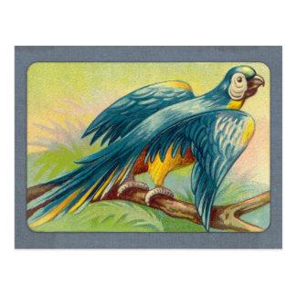 Vintager Papageien-Druck Postkarte