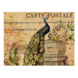 Vintager Pfau des französischen botanischen Postkarte