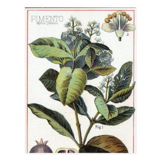 Vintager Piment Postkarte