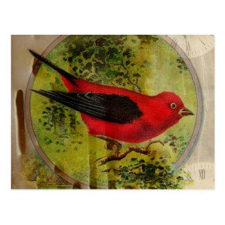 Vintager roter Vogel Postkarten