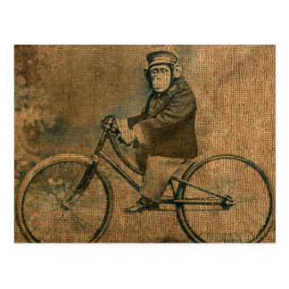 Vintager Schimpanse, der Fahrrad fährt
