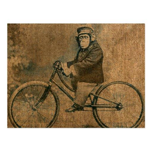 Vintager Schimpanse, der Fahrrad fährt Postkarte