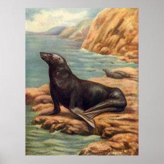 Vintager Seelöwe durch die Küste, Meeressäugetiere Poster