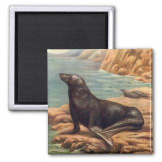 Vintager Seelöwe durch die Küste, Meeressäugetiere Quadratischer Magnet