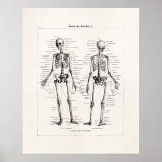 Vintager Skeleton menschlicher Anatomie-Knochen Poster