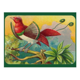Vintager tropischer Vogel-Druck Postkarte