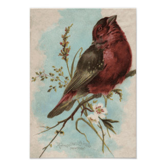 Vintager Vogel-Druck Poster