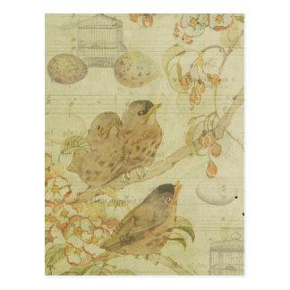 Vintager Vogel-NiederlassungBirdcage Eggs Postkarte