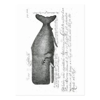 Vintager Wal-Entwurf Postkarte