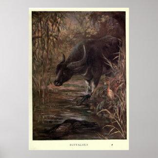 Vintager Wasser-Büffel Painting (1909) Poster