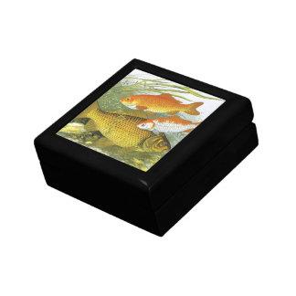 Vintager WasserGoldfish Koi, Marineseeleben-Fisch Geschenkbox