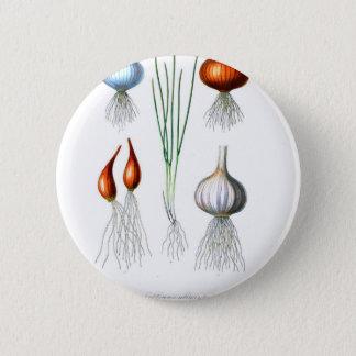Vintager Zwiebel-Knoblauch-botanischer Druck Runder Button 5,1 Cm