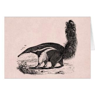 Vintages 1800s Aardvark-Rosa-Retro Ameisen-Esser Karte