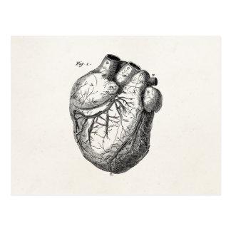 Vintages 1800s Herz-Retro Herzanatomie-Herzen