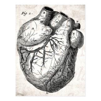 Vintages 1800s Herz-Retro Herzanatomie-Herzen Postkarte