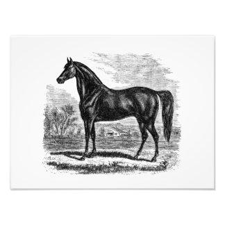 Vintages 1800s Pferd - Morgan-Reiter-Schablone Photo Drucke