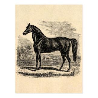 Vintages 1800s Pferd - Morgan-Reiter-Schablone Postkarte