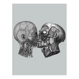 Vintages anatomisches Hauptküssen Postkarte