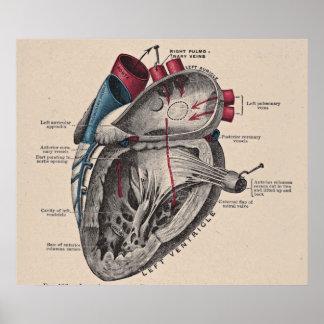 Vintages anatomisches Herz-Diagramm Poster