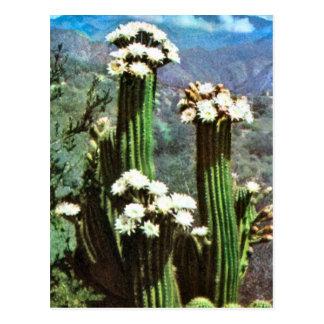 Vintages Argentinien, blühender Kaktus Postkarte