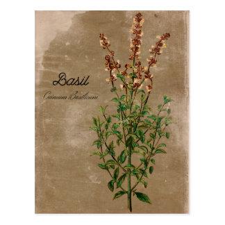 Vintages Art-Basilikum-Kraut Postkarte