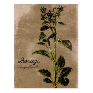 Vintages Artborage-Kraut Postkarte