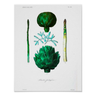 Vintages botanisches Plakat - Artischocke