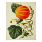 Vintages botanisches Plakat - Kürbis