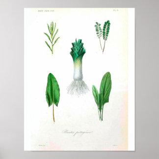 Vintages botanisches Plakat - Porree