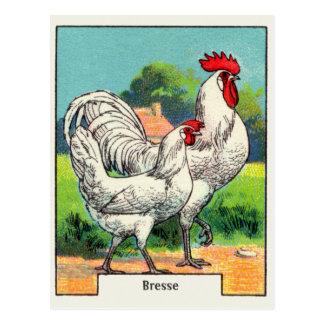 Vintages Bresse Huhn Postkarte