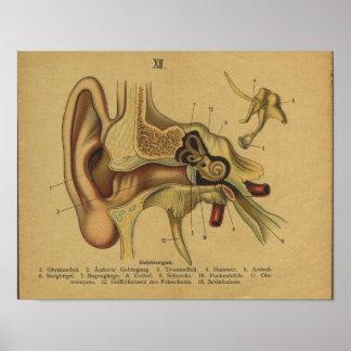 Vintages deutsches Anatomie-Druck-Ohr Poster