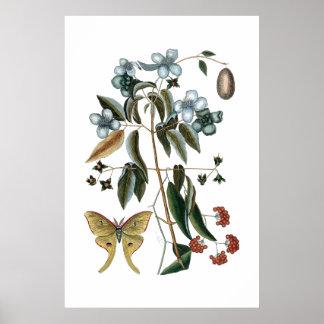 Vintages grünes botanisches Plakat