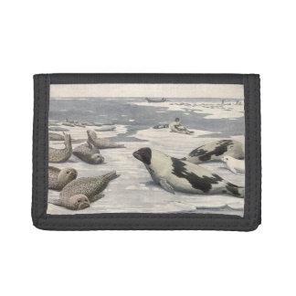 Vintages Harfen-Siegel im arktischen Schnee,