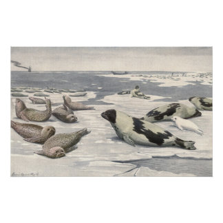 Vintages Harfen-Siegel im arktischen Schnee, Poster