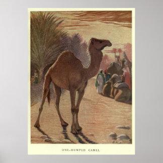 Vintages Kamel Painting (1909) Poster