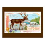 Vintages Karibu (Ren) und arktischer Fox Postkarten