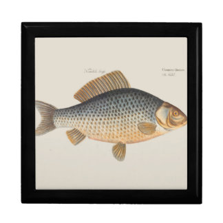 Vintages Karpfen-Frischwasserfisch-Zeichnen Erinnerungskiste