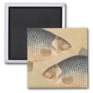 Vintages Karpfen-Frischwasserfisch-Zeichnen Quadratischer Magnet