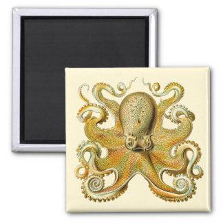 Vintages Kraken, Krake Gamochonia, Ernst Haeckel Quadratischer Magnet