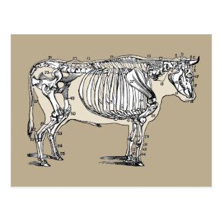 Vintages Kuh-Skelett Postkarten