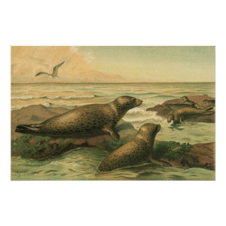 Vintages Leopard-Siegel, Wassertier-Marineleben Poster