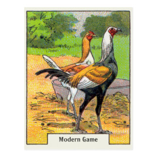 Vintages modernes Spiel-Huhn Postkarte