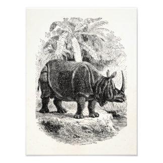 Vintages Nashorn mit Horn-personalisierten Tieren Photo