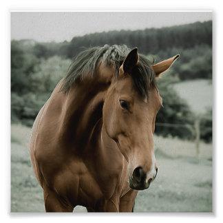 Vintages Pferdetiermalereikunst Photodrucke
